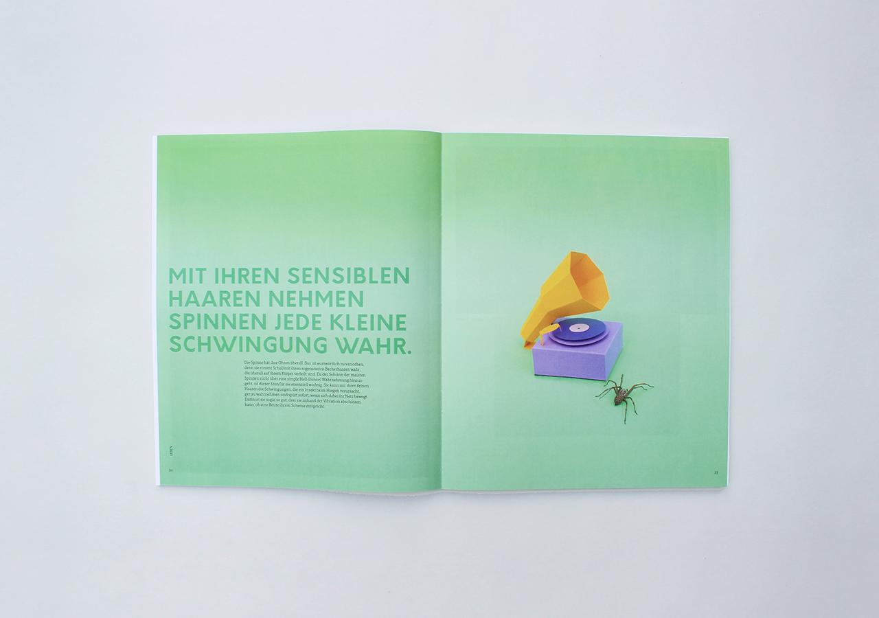 spinnenbuch2_designstudentin_nele-henrich