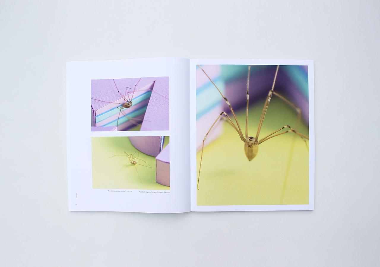 spinnenbuch4_designstudentin_nele-henrich