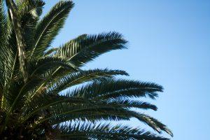PalmevorblauemHimmel