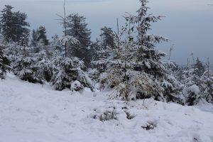 Designstudentin im Winterwunderland