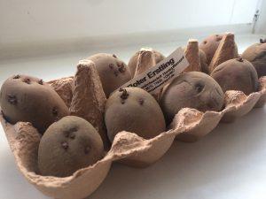 Kartoffeln die vorkeimen