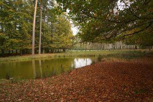 Autumn Pantone