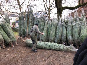 Designstudenten besorgen Weihnachtsbaum