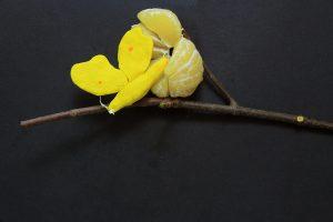 Für die Zitrustage im Palmengarten drehten die Designstudentinnen einen Film zum Thema Zitronenfalter