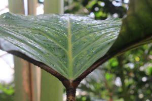 Designstudenten der ESOD bekommen eine Führung im Palmengarten