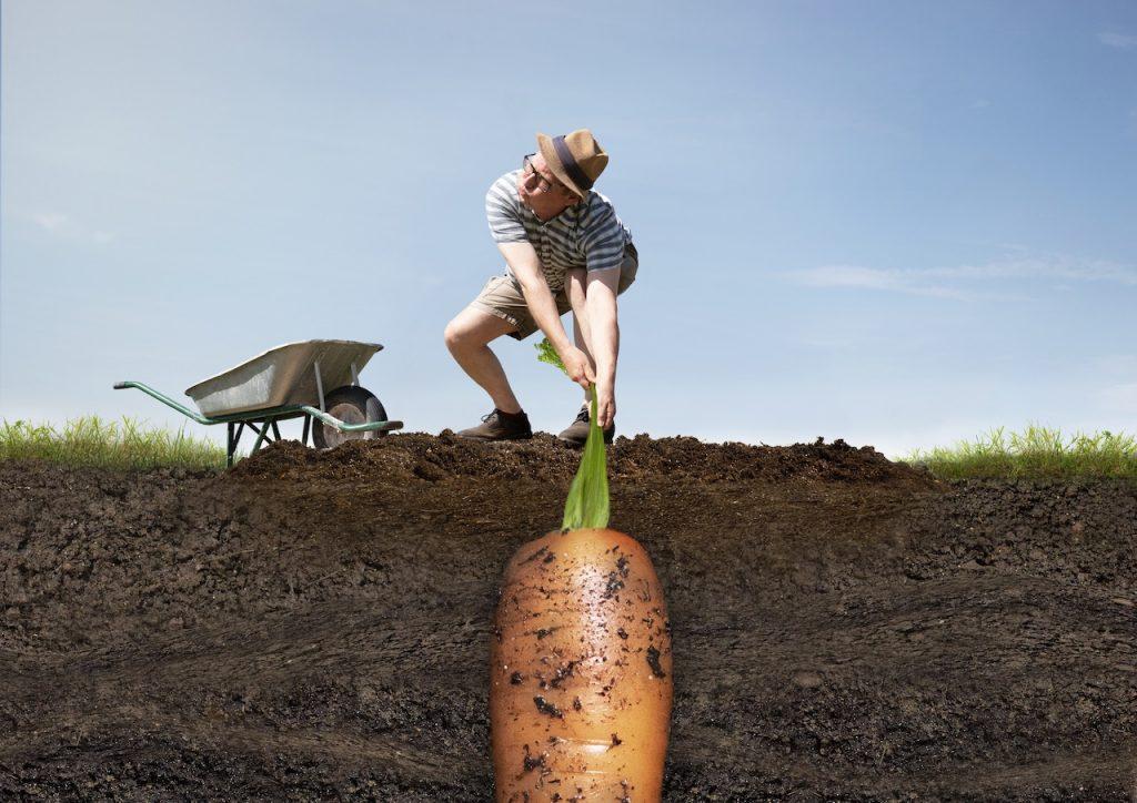 Motiv der Printkampagne für Gemüsedünger