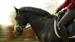 Bewegungsunschärfe Pferd