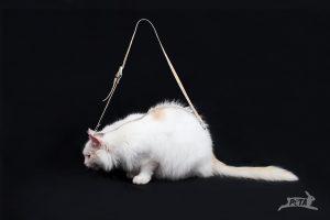 Katzentasche